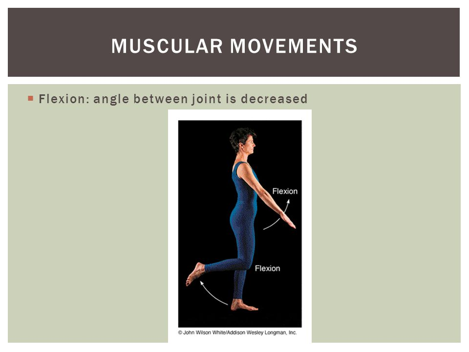 Muscular movements Flexion: angle between joint is decreased