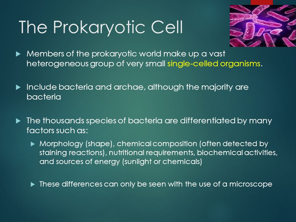 The Prokaryotic Cell Members of the prokaryotic world make up a vast heterogeneous group of very small single-celled organisms.