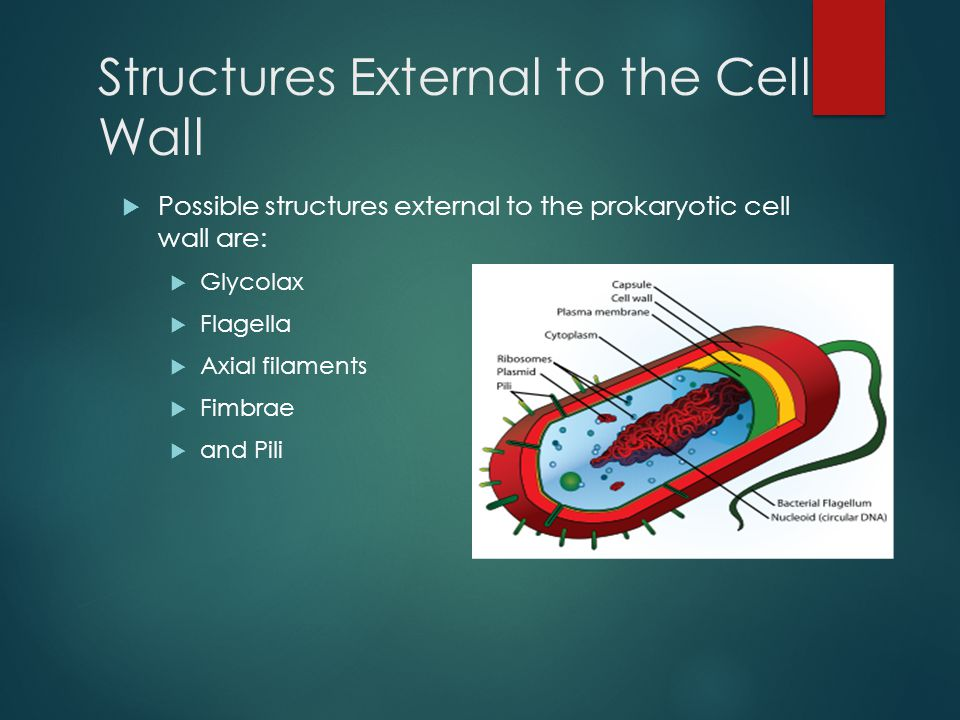 Structures External to the Cell Wall