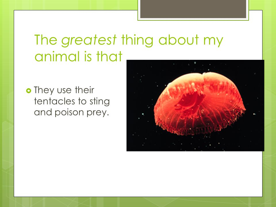 The greatest thing about my animal is that