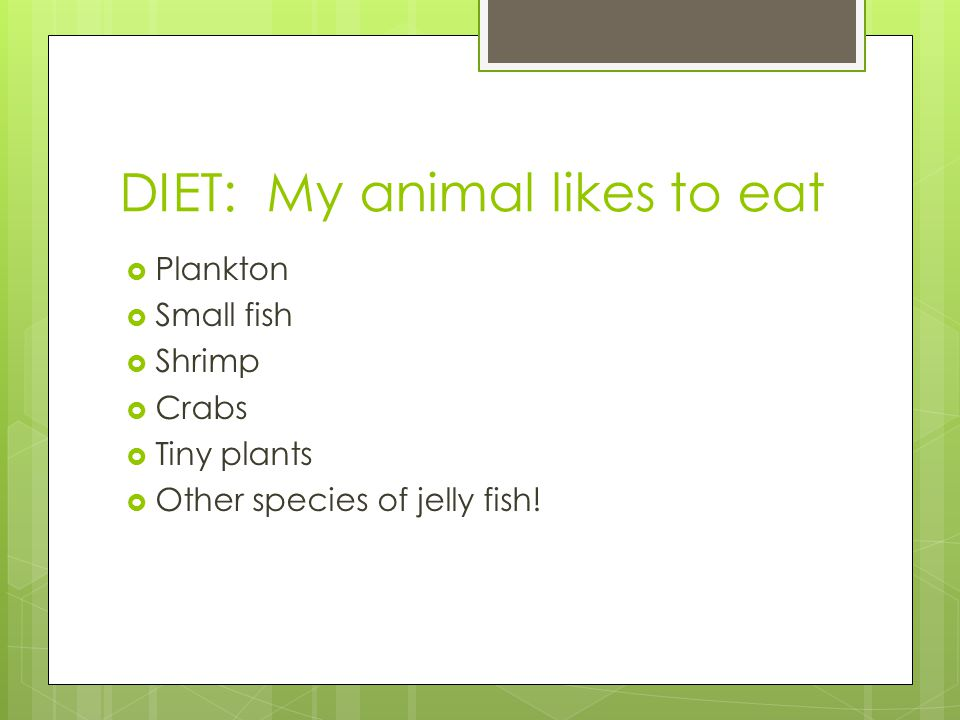 DIET: My animal likes to eat