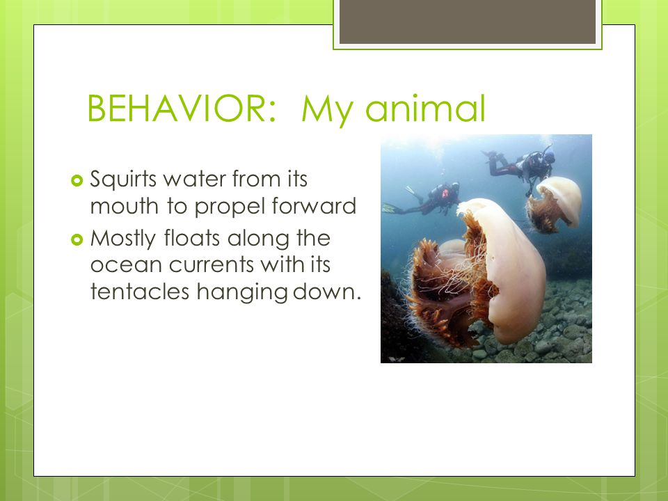 BEHAVIOR: My animal Squirts water from its mouth to propel forward