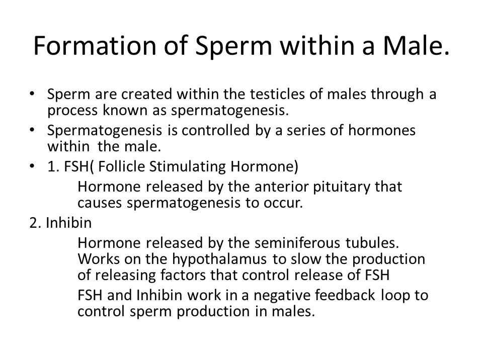 Formation of Sperm within a Male.
