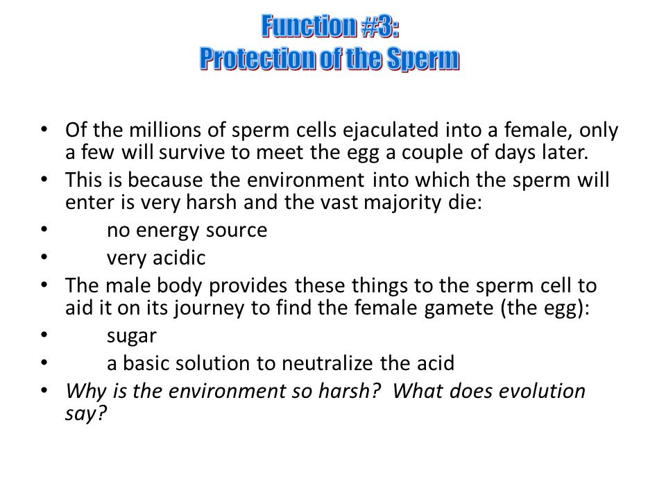 Function #3: Protection of the Sperm