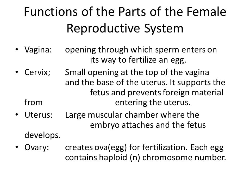 Functions of the Parts of the Female Reproductive System