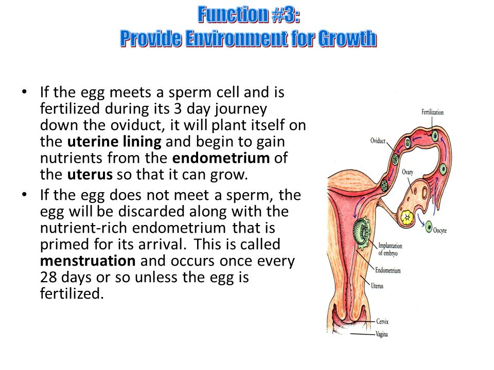Function #3: Provide Environment for Growth
