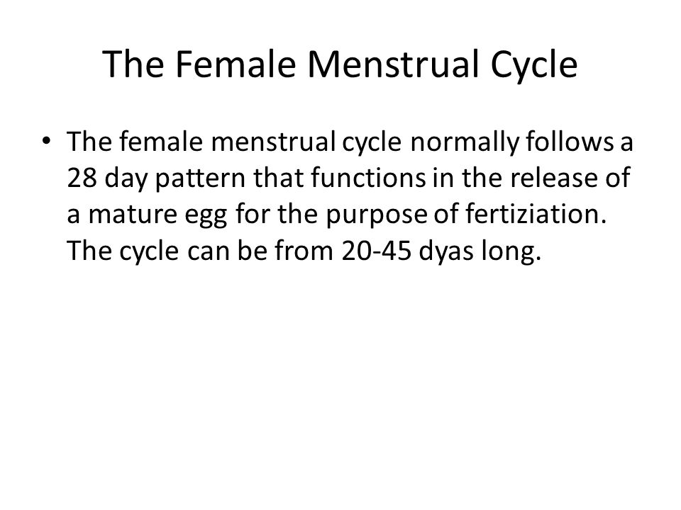 The Female Menstrual Cycle
