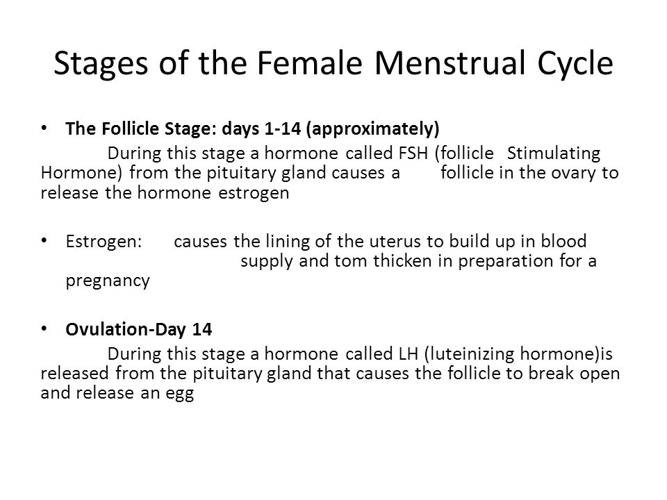 Stages of the Female Menstrual Cycle