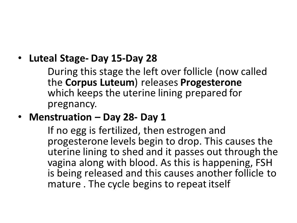 Luteal Stage- Day 15-Day 28