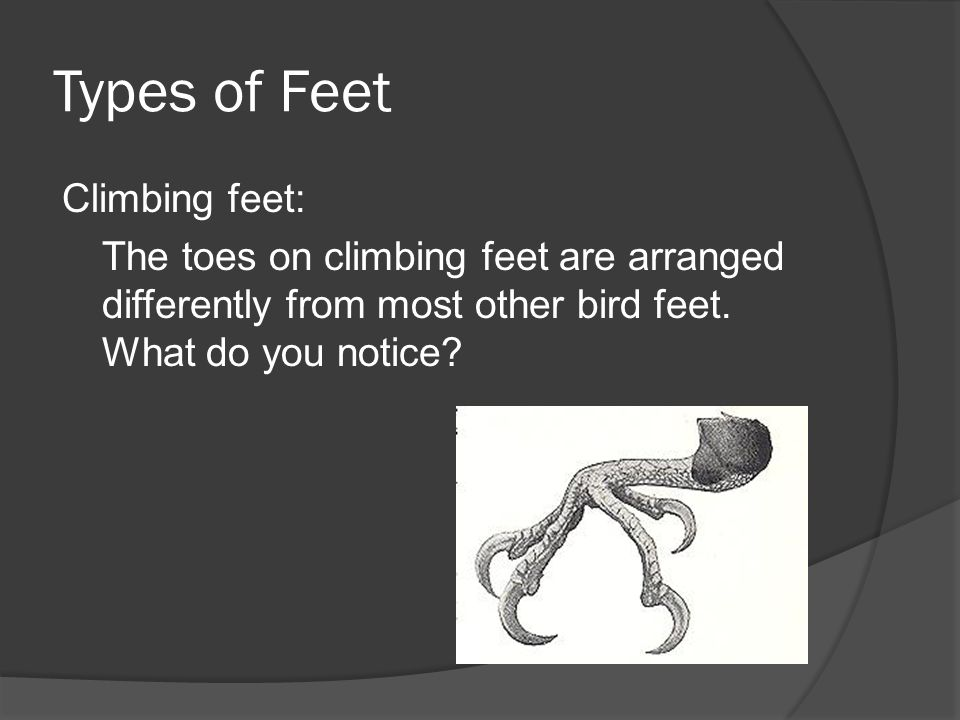 Types of Feet Climbing feet: The toes on climbing feet are arranged differently from most other bird feet.