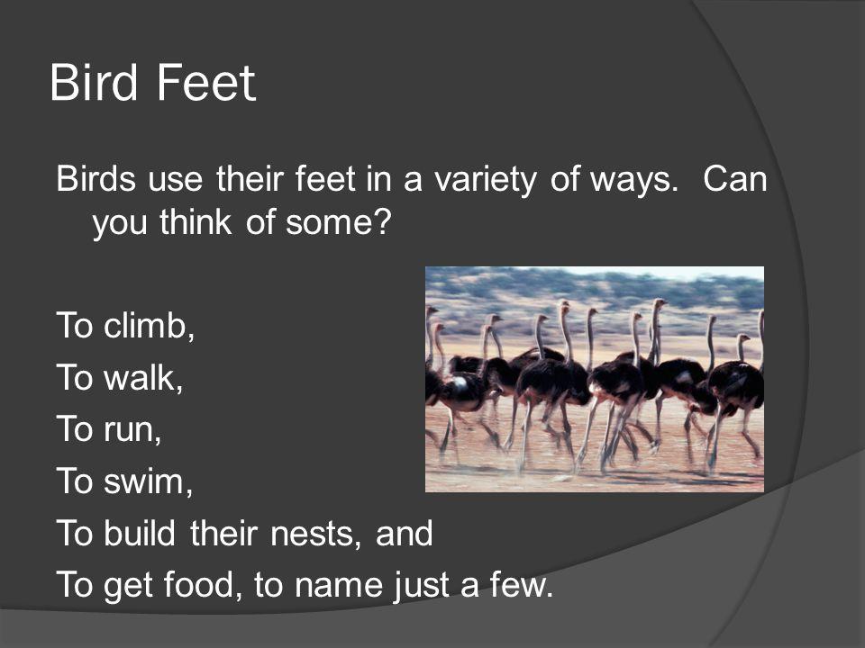 Bird Feet