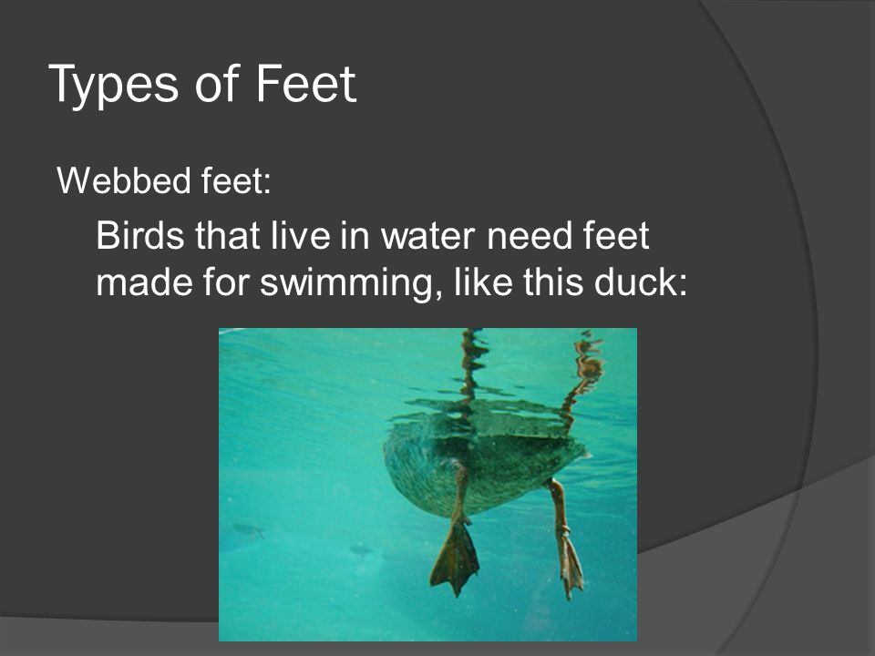 Types of Feet Birds that live in water need feet