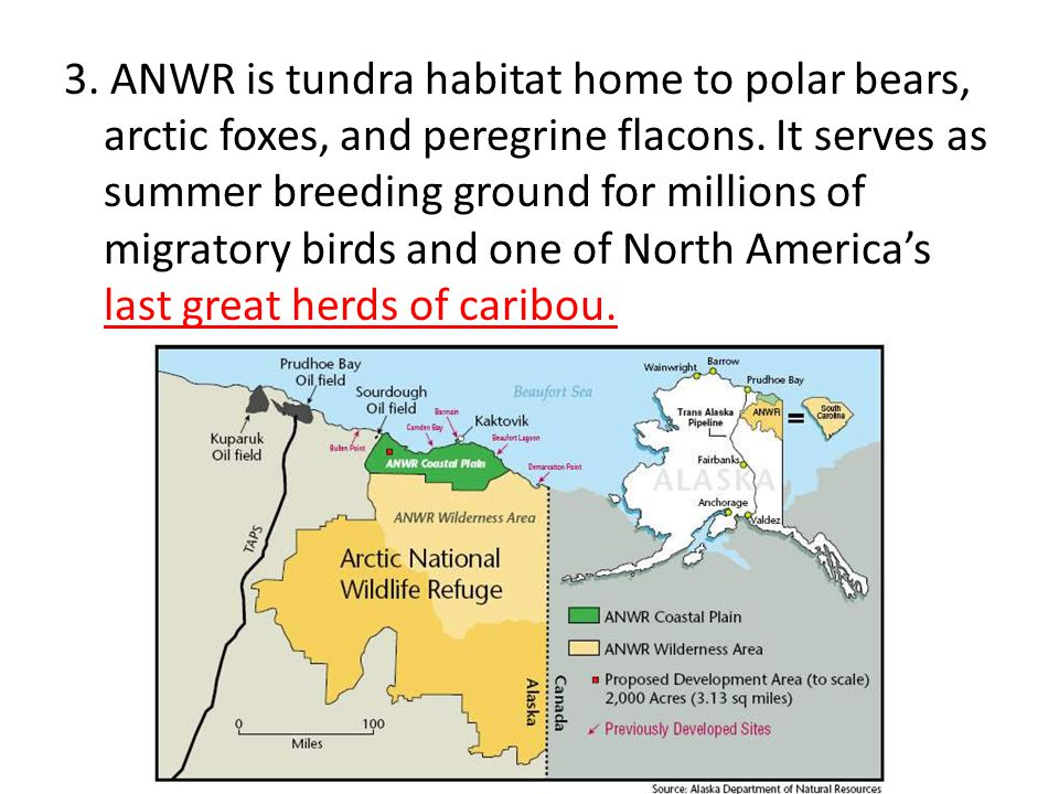 3. ANWR is tundra habitat home to polar bears, arctic foxes, and peregrine flacons.