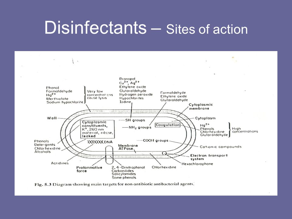 Disinfectants – Sites of action