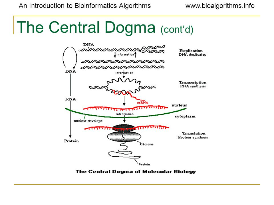 The Central Dogma (cont'd)