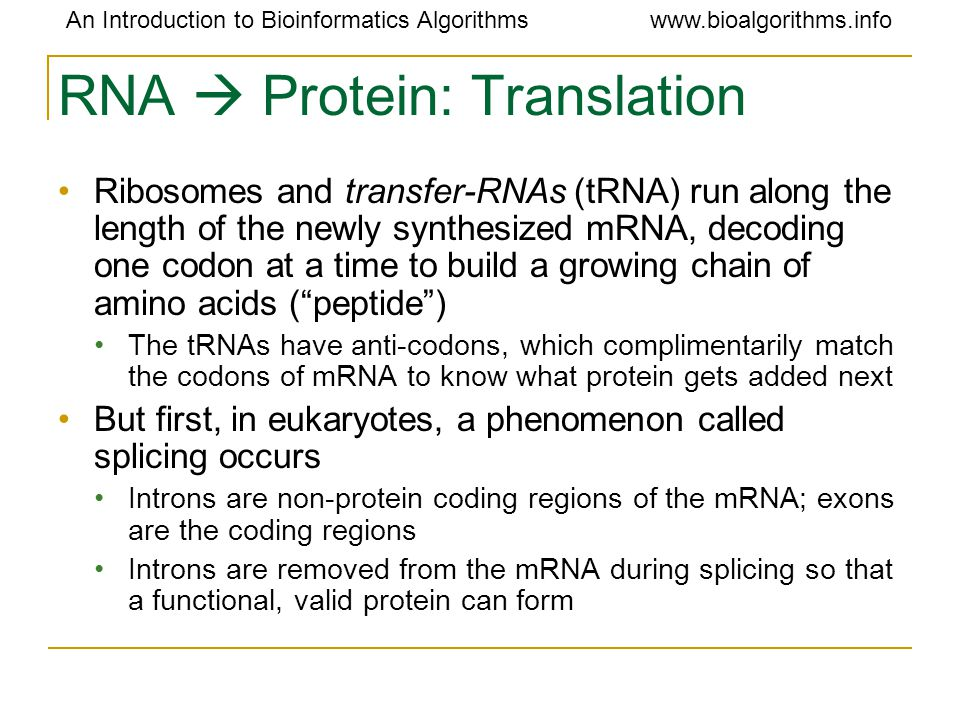 RNA  Protein: Translation