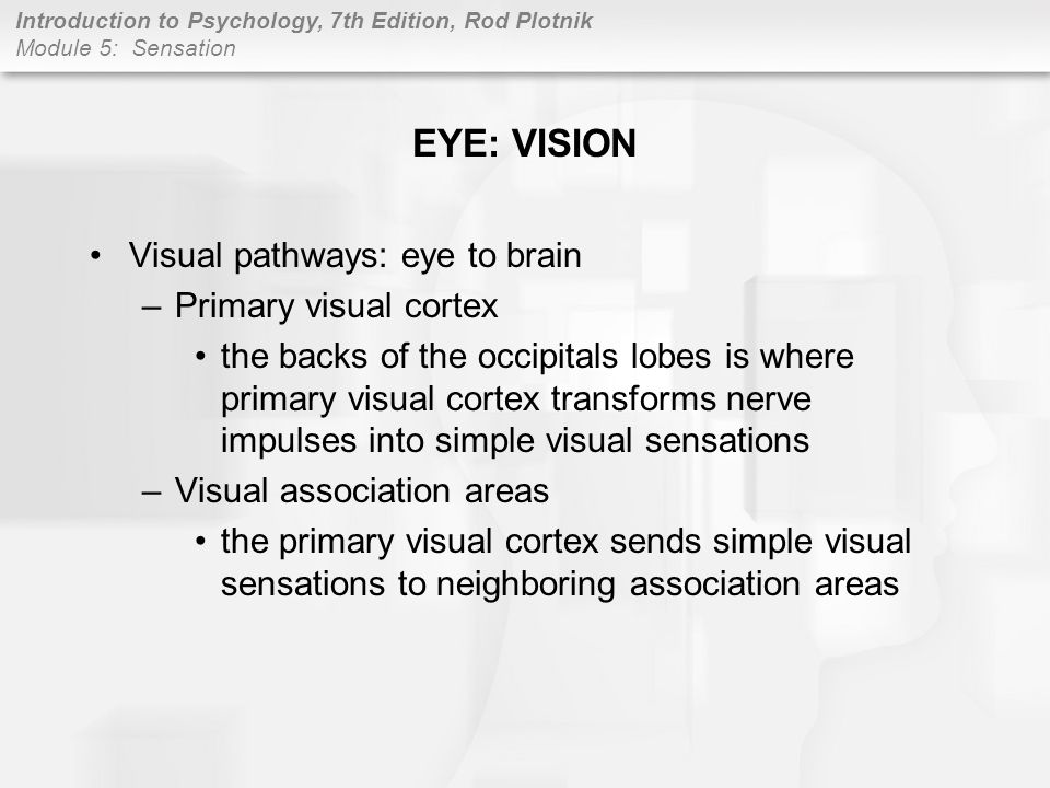 EYE: VISION Visual pathways: eye to brain Primary visual cortex