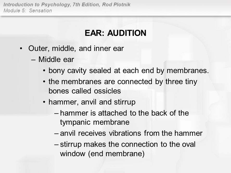 EAR: AUDITION Outer, middle, and inner ear Middle ear