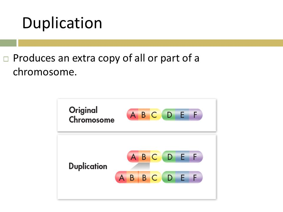 Duplication Produces an extra copy of all or part of a chromosome.