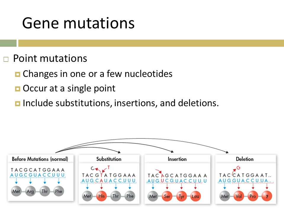 Gene mutations Point mutations Changes in one or a few nucleotides