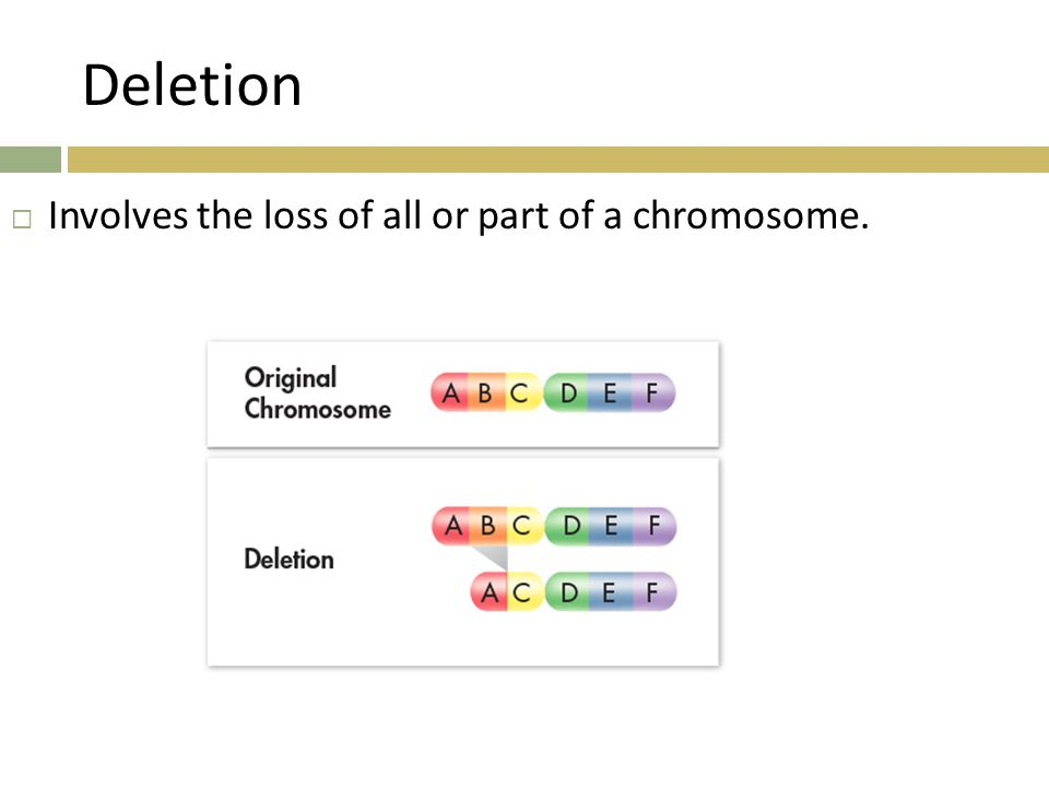 Deletion Involves the loss of all or part of a chromosome.