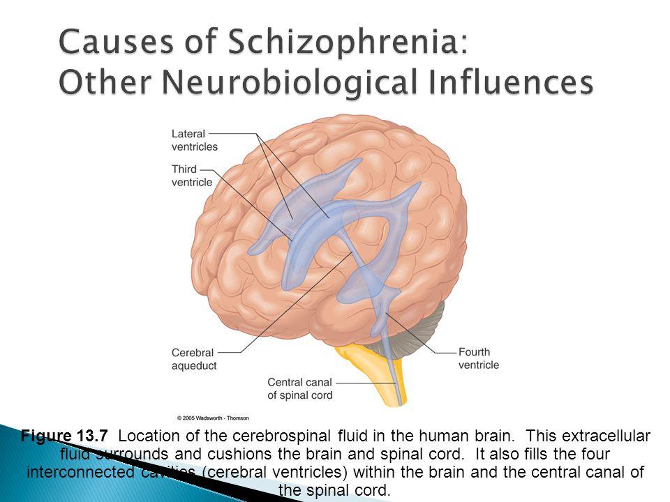 Causes of Schizophrenia: Other Neurobiological Influences