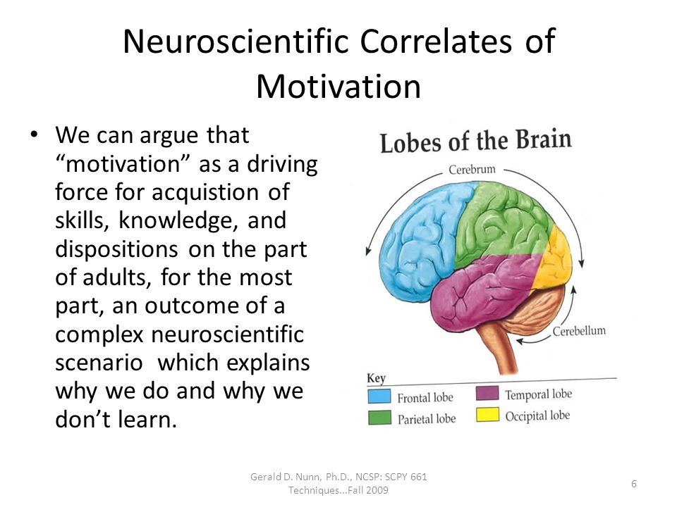 Neuroscientific Correlates of Motivation