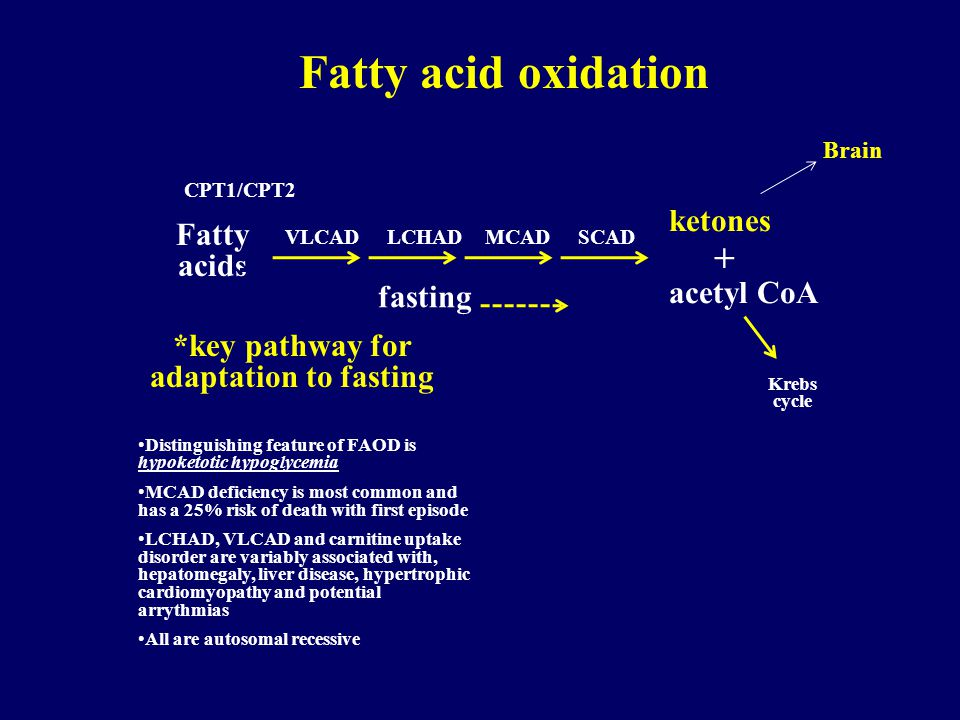 *key pathway for adaptation to fasting