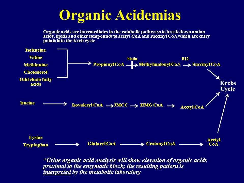 Organic Acidemias Krebs Cycle