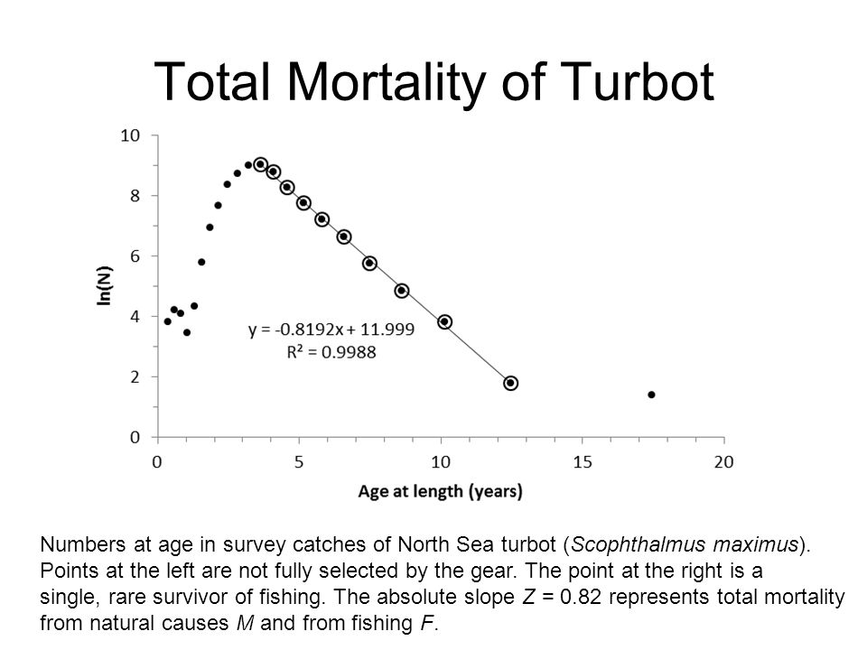 Total Mortality of Turbot