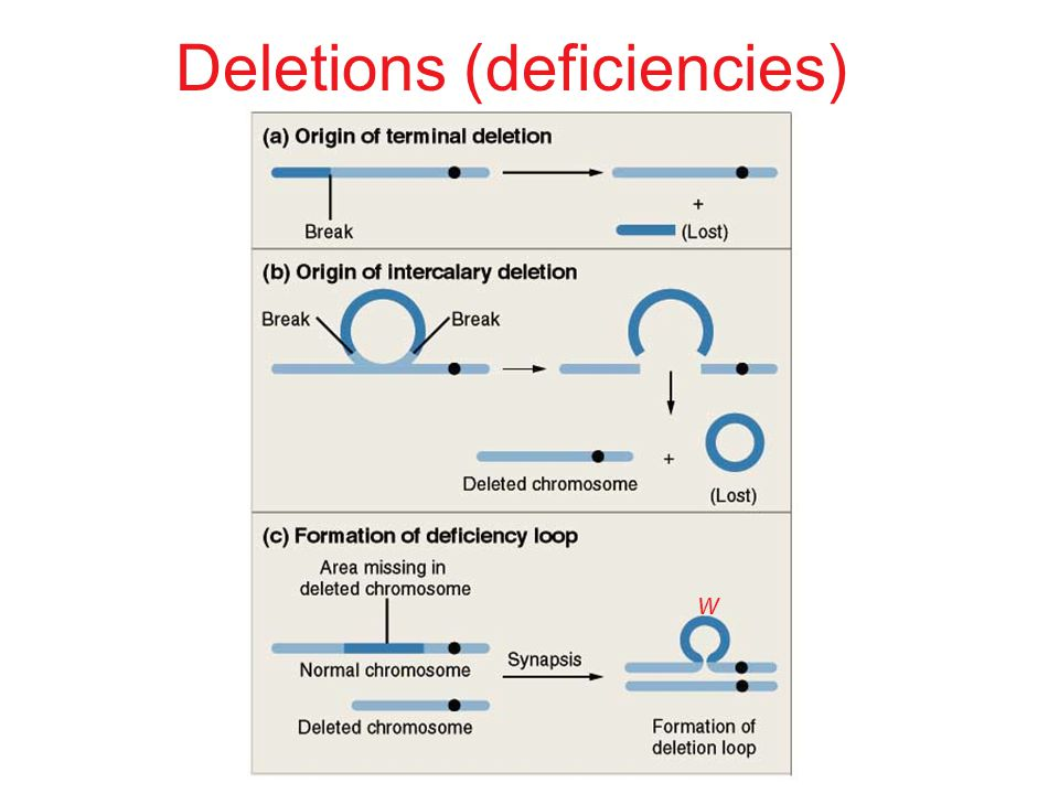 Deletions (deficiencies)