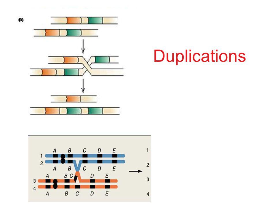 Duplications