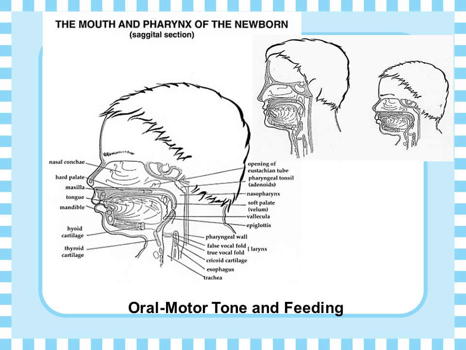 Oral-Motor Tone and Feeding