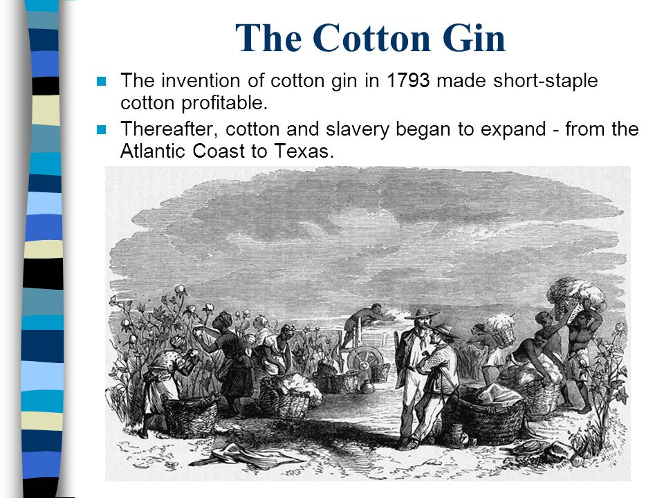 The Cotton Gin The invention of cotton gin in 1793 made short-staple cotton profitable.