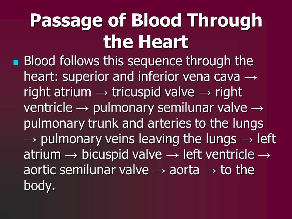 Passage of Blood Through the Heart