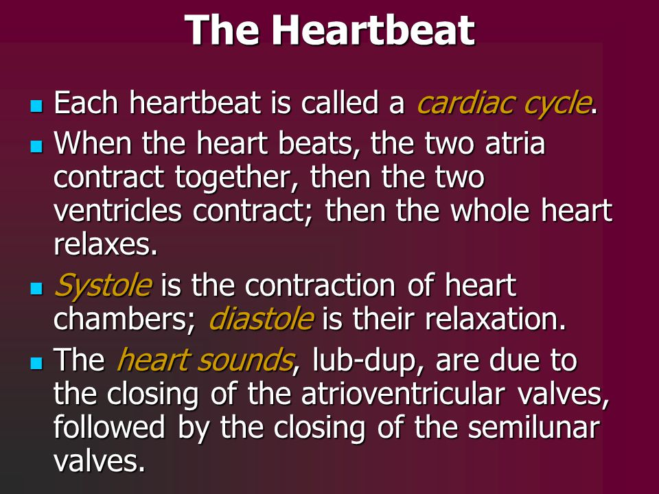 The Heartbeat Each heartbeat is called a cardiac cycle.
