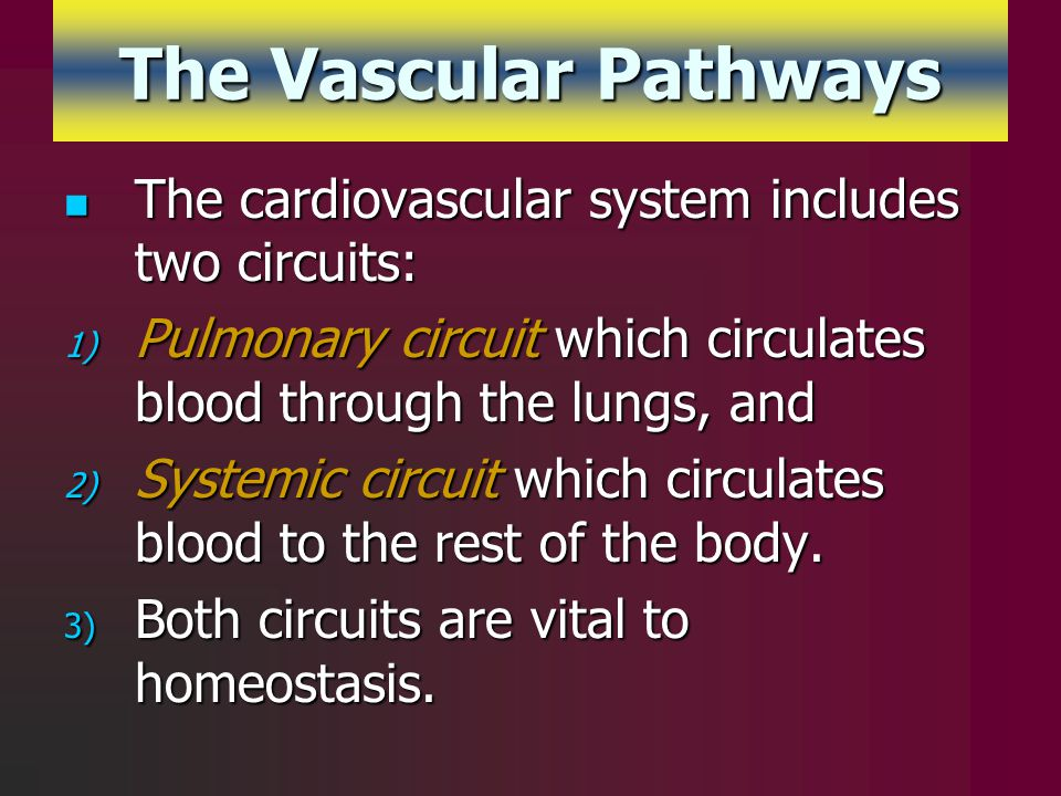 The Vascular Pathways The cardiovascular system includes two circuits:
