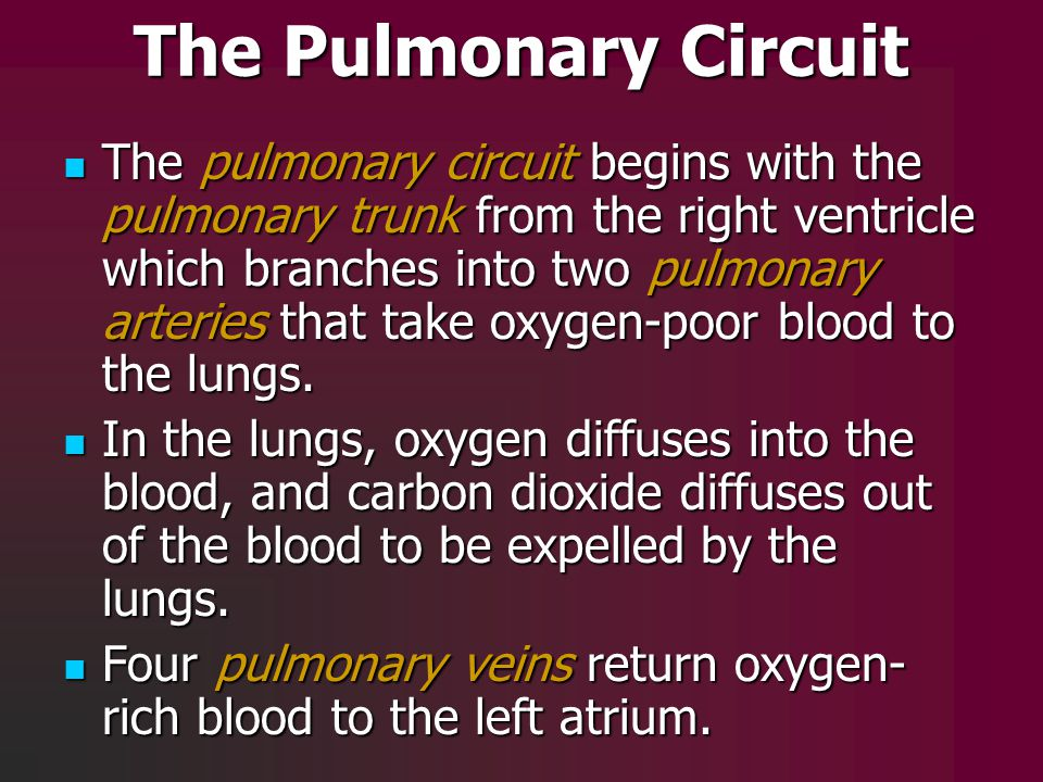 The Pulmonary Circuit