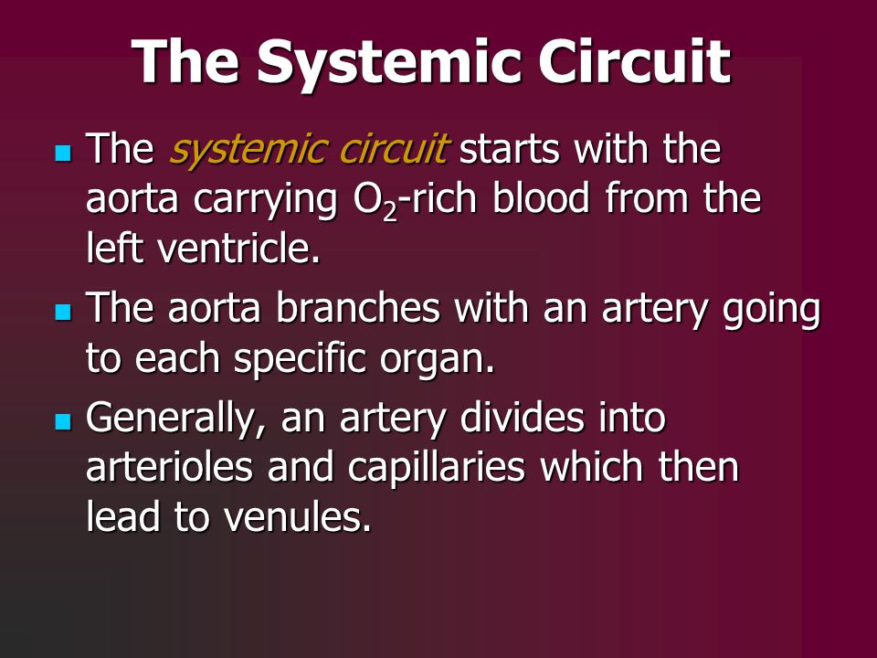 The Systemic Circuit The systemic circuit starts with the aorta carrying O2-rich blood from the left ventricle.