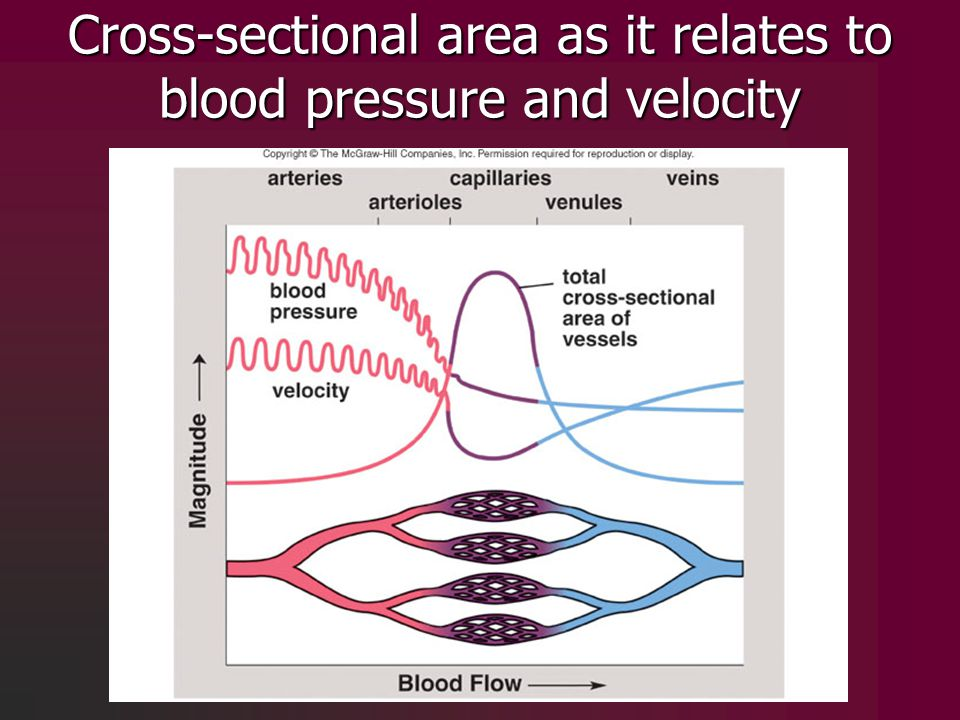 Cross-sectional area as it relates to blood pressure and velocity