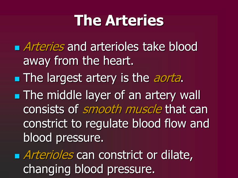 The Arteries Arteries and arterioles take blood away from the heart.