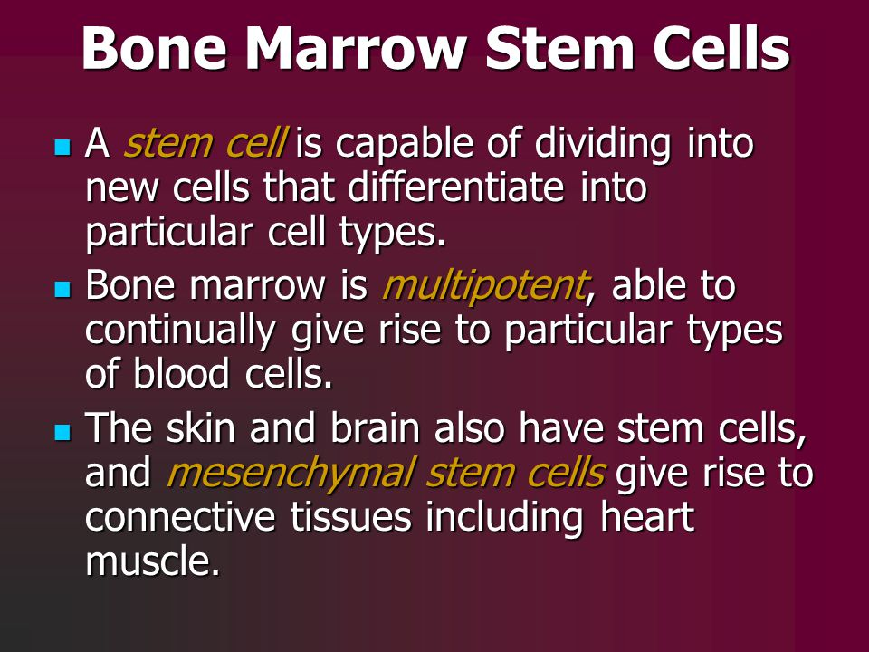 Bone Marrow Stem Cells A stem cell is capable of dividing into new cells that differentiate into particular cell types.