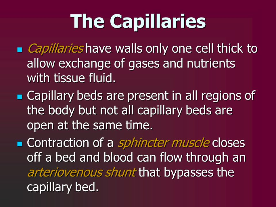 The Capillaries Capillaries have walls only one cell thick to allow exchange of gases and nutrients with tissue fluid.