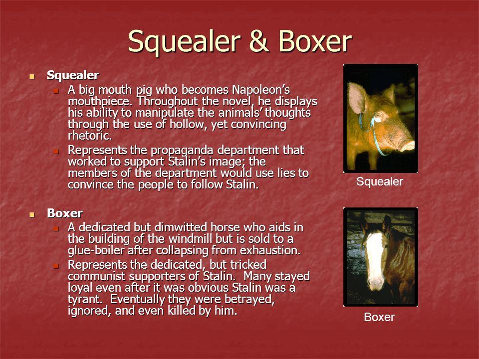 Squealer & Boxer Squealer