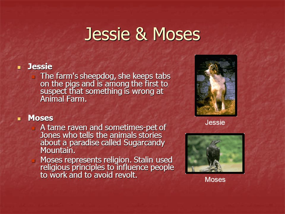 Jessie & Moses Jessie. The farm s sheepdog, she keeps tabs on the pigs and is among the first to suspect that something is wrong at Animal Farm.