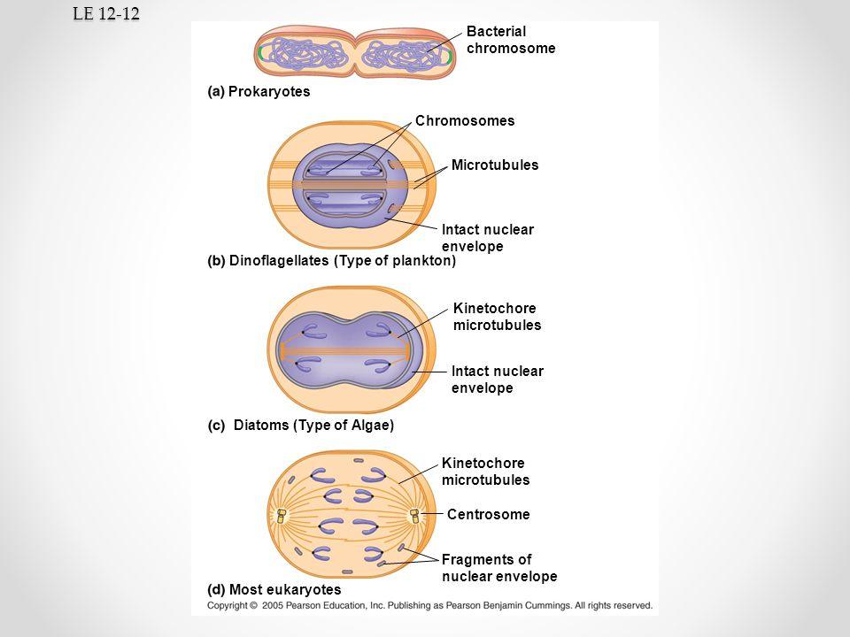 LE 12-12 Bacterial chromosome Prokaryotes Chromosomes Microtubules