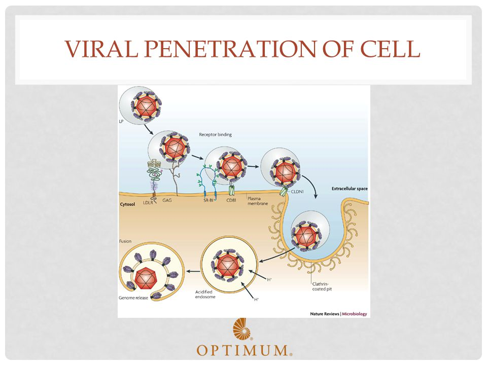 Viral Penetration of Cell