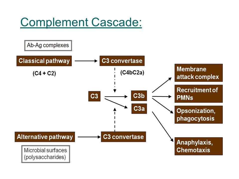 Complement Cascade: