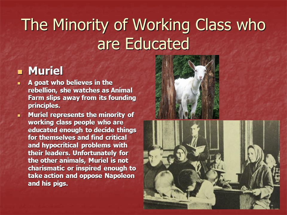 The Minority of Working Class who are Educated