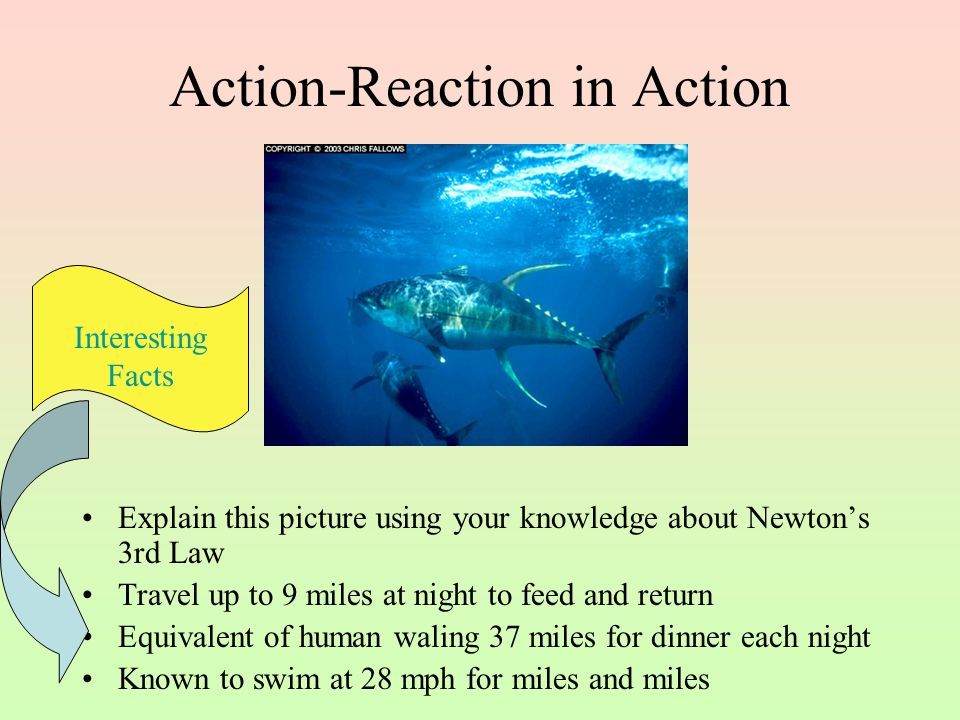 Action-Reaction in Action